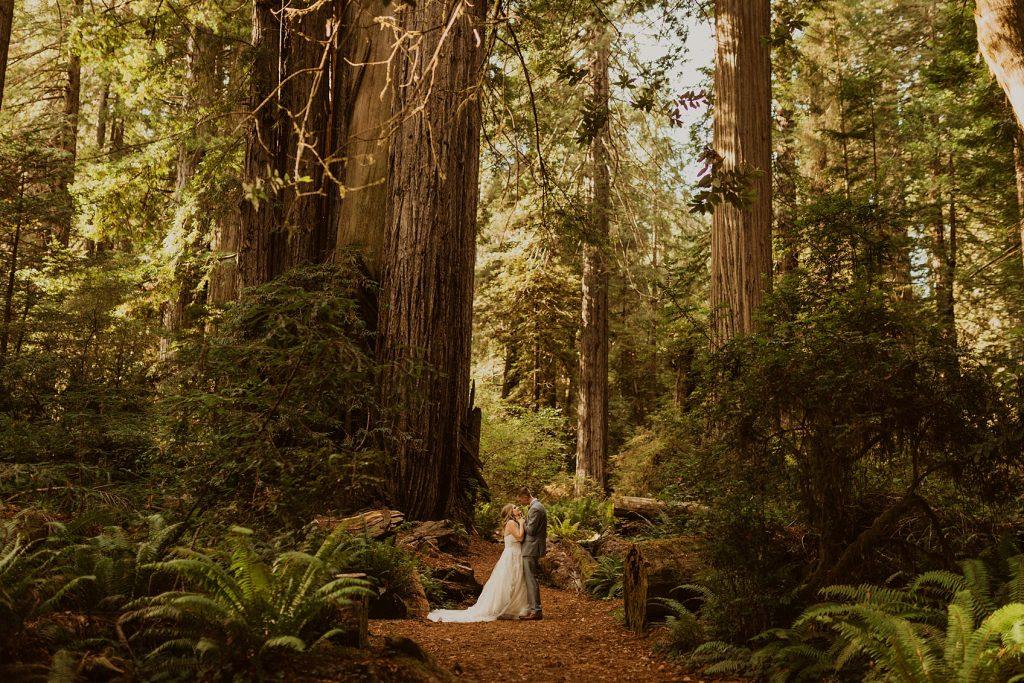 Redwood Forest Wedding Photographer