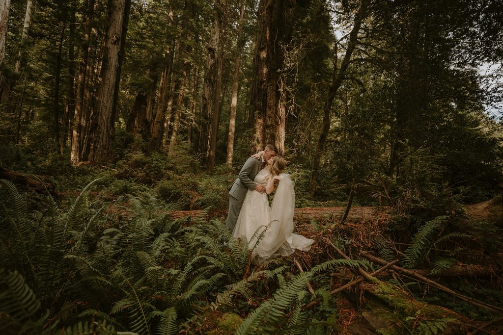 Redwood Forest Elopement Photographer